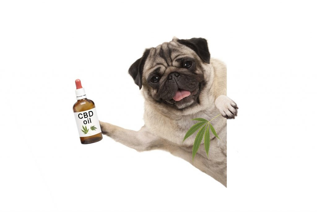 Utilizing CBD Oils For Dog